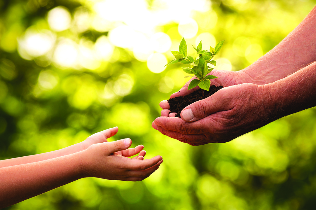 Close up of senior hands giving small plant to a child.