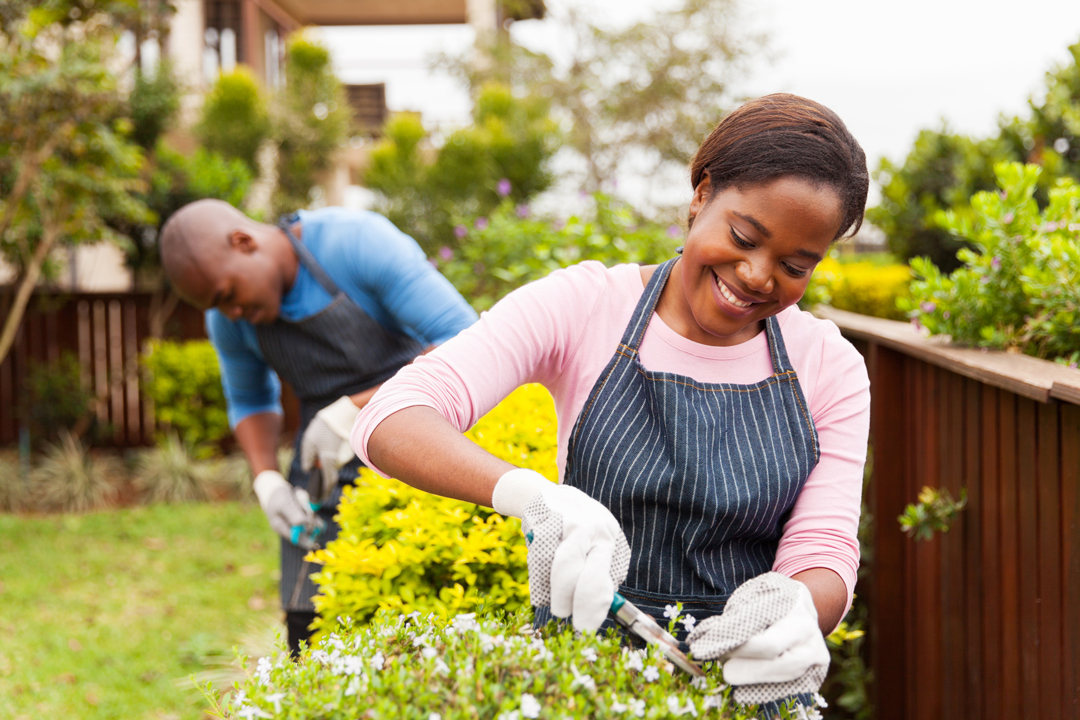 Young woman trimming flowers while her husband trims hedges in the background.